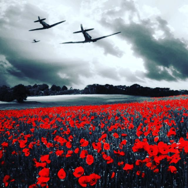 Remembering those past and present who fought for our freedom❤️ to never be forgotten. #remembranceday #nowar #peaceandlove #studiocarme #agegracefully #lovelive